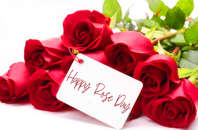 Beautiful Red Rose Happy Rose Day Image