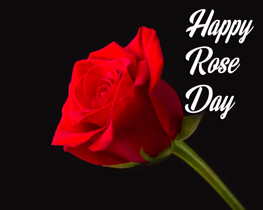 Beautiful Red Rose with Happy Rose Day Wish