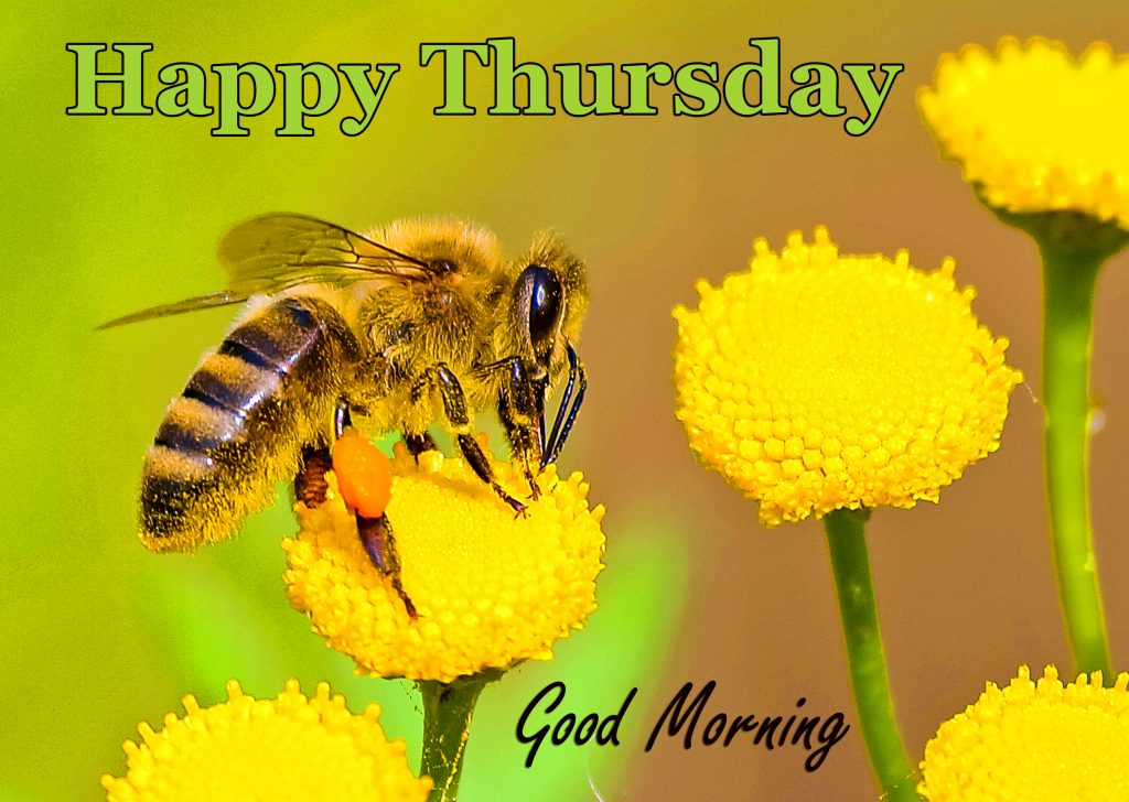 56+ Thursday Good Morning Wishes Images
