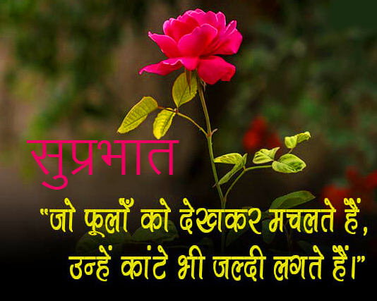 Best Flower Quotes Suprabhat Image