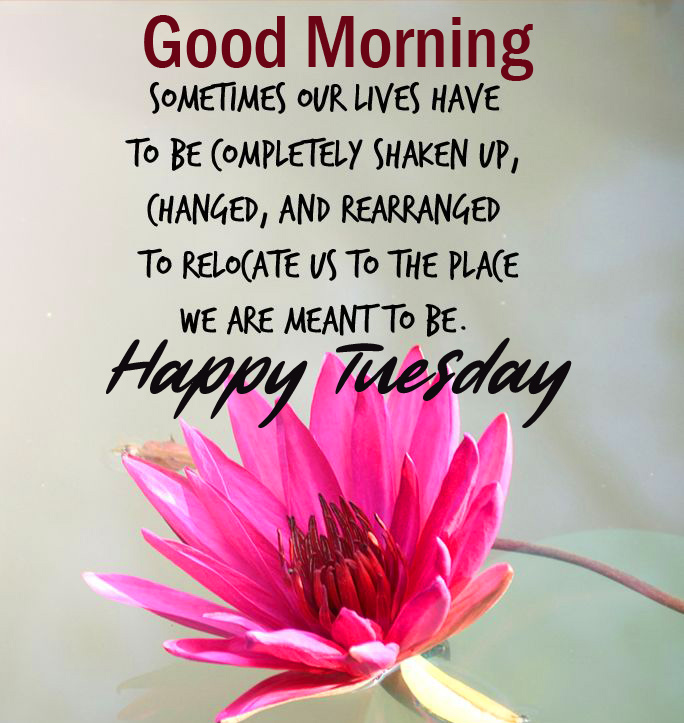 Best Quotes Good Morning Happy Tuesday Image