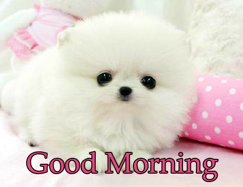 Cute Fluffy Puppy Good Morning Picture