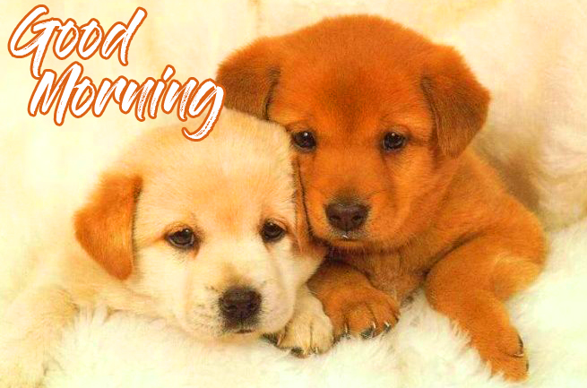 Cute Puppy Good Morning Image