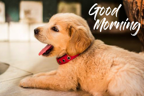 Cute Puppy with Good Morning Wish