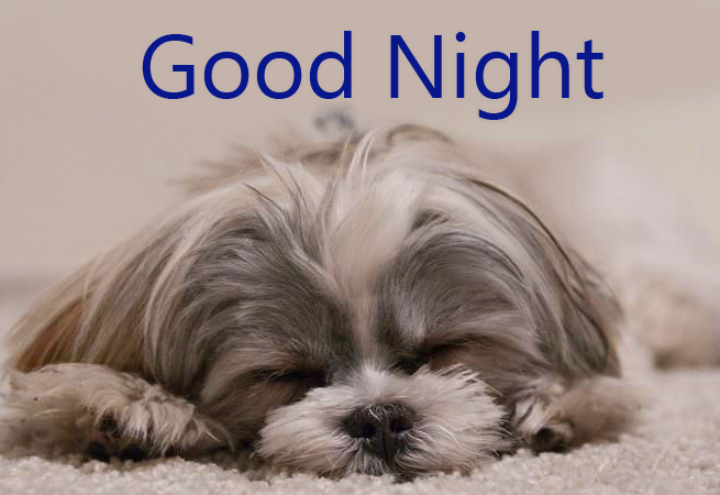 Cute Sleeping Puppy Good Night Image
