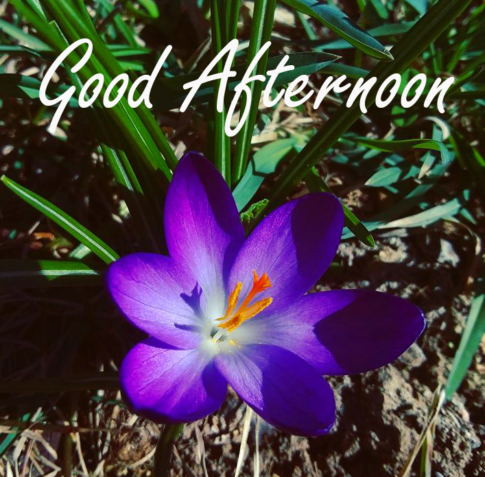 Flower with Good Afternoon Wish