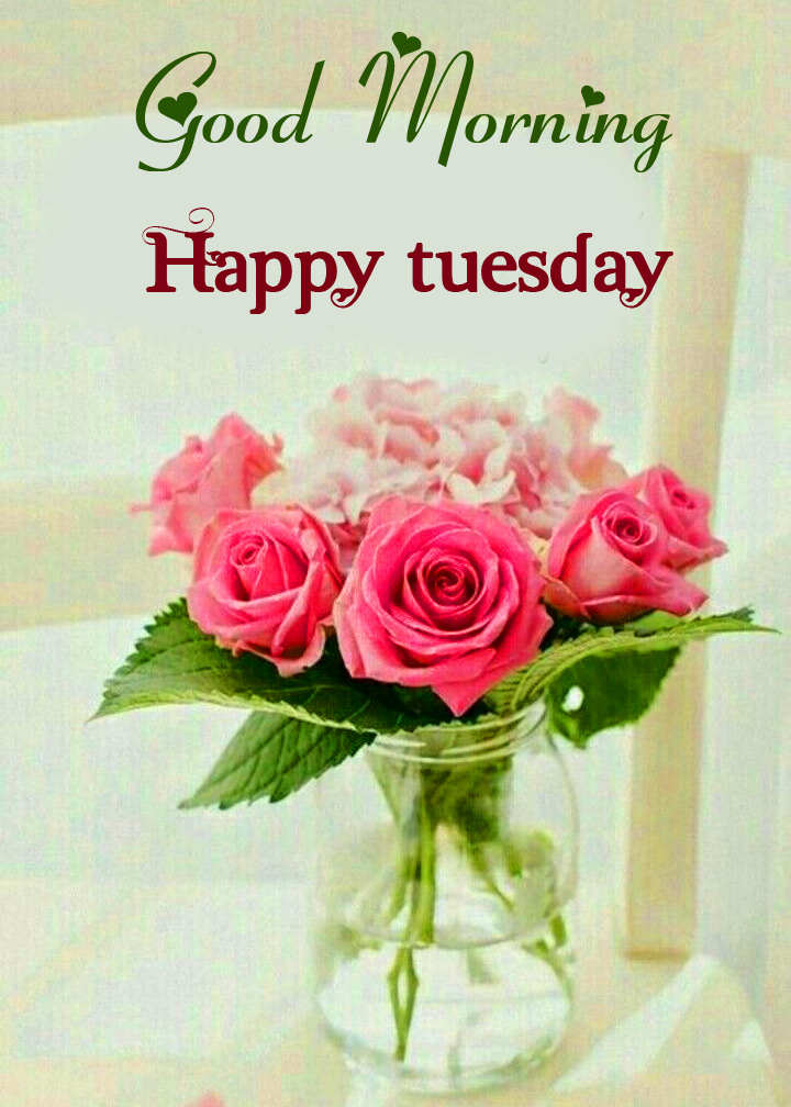Flowers Good Morning Happy Tuesday Image