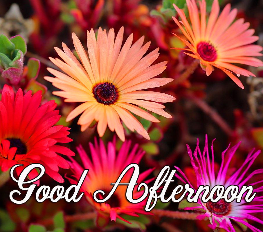Flowers with Beautiful Good Afternoon Wish