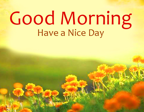 Flowers with Good Morning Message Image HD