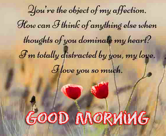 Flowers with Love Quotes and Good Morning Wish