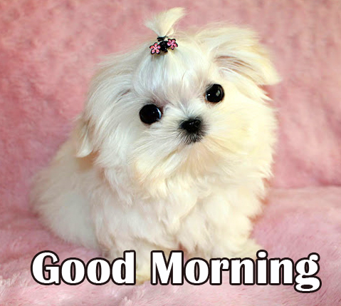 Fluffy Puppy with Cute Good Morning Wish