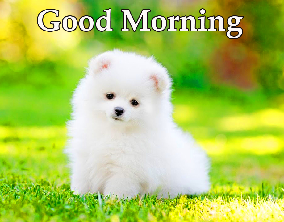Fluffy White Puppy Good Morning Picture