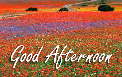 Good Afternoon Flowers Wallpaper