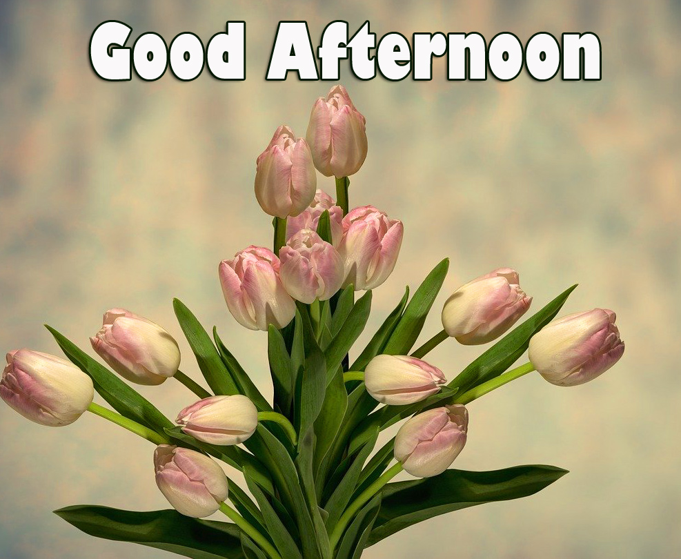 Good Afternoon Tulips Image