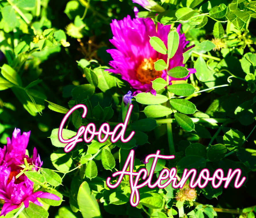 Good Afternoon Wish with Flowers