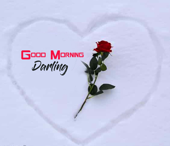 Good Morning Darling with Red Rose