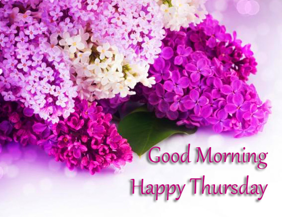 Good Morning Happy Thursday with Purple Flowers