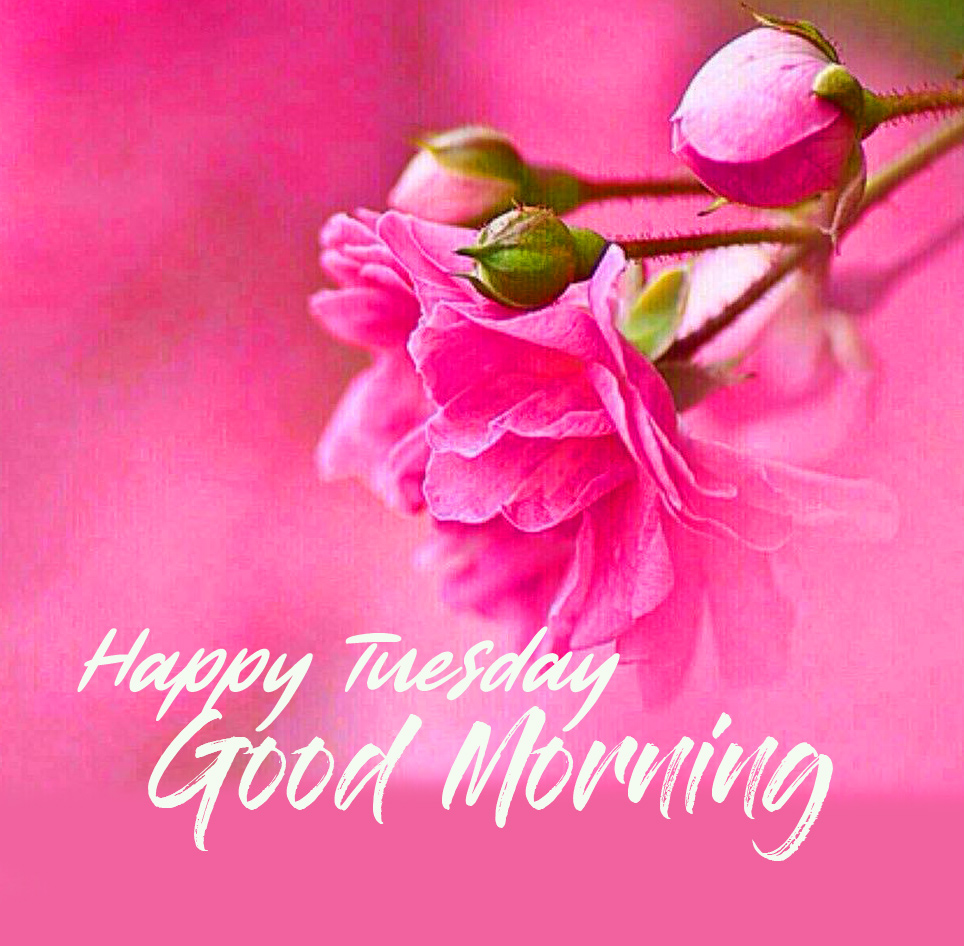 Good Morning Happy Tuesday Wish with Pink Flowers - PIX Trends