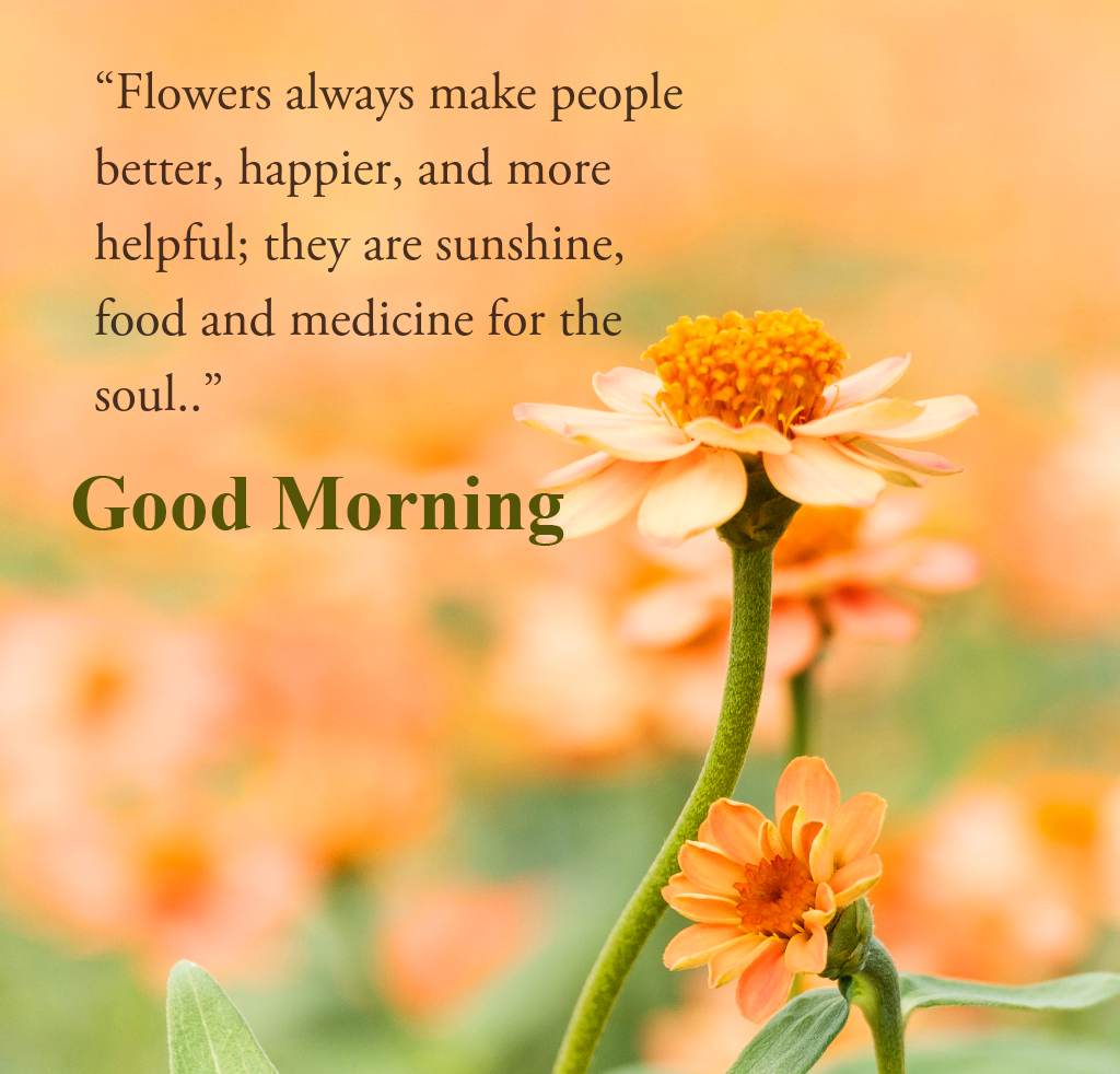 Good Morning Message Wallpaper