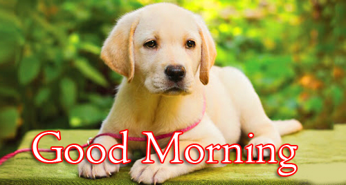 Good Morning Message with Puppy