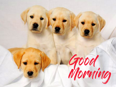 Good Morning Puppies Pic