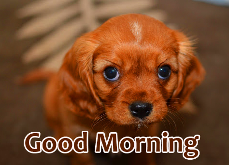Good Morning Puppy Sweet Wallpaper HD