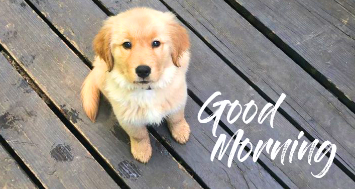 Good Morning Puppy Wallpaper