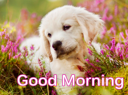 Good Morning Puppy Wis Pic