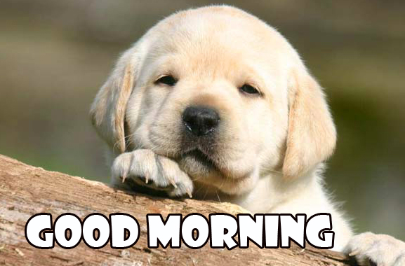 Good Morning Puppy Wish Wallpaper