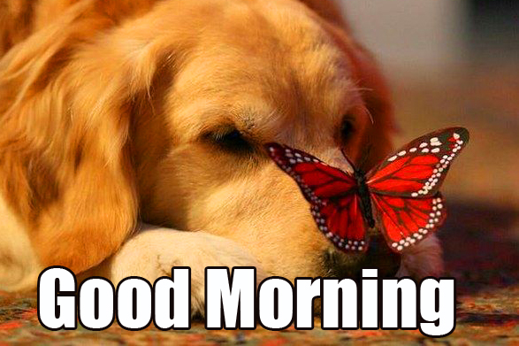 Good Morning Puppy with Butterfly Image