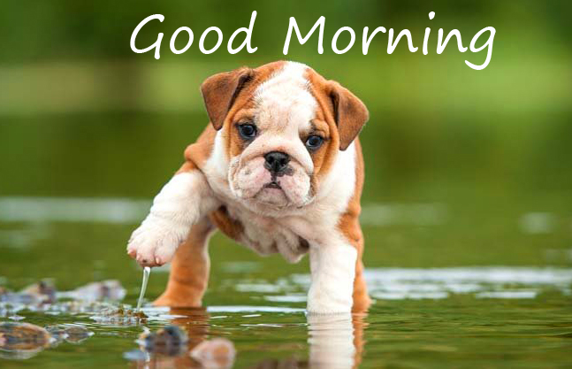 Good Morning Wish with Cute Puppy