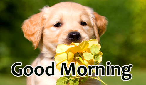 Good Morning Wish with Flower and Puppy