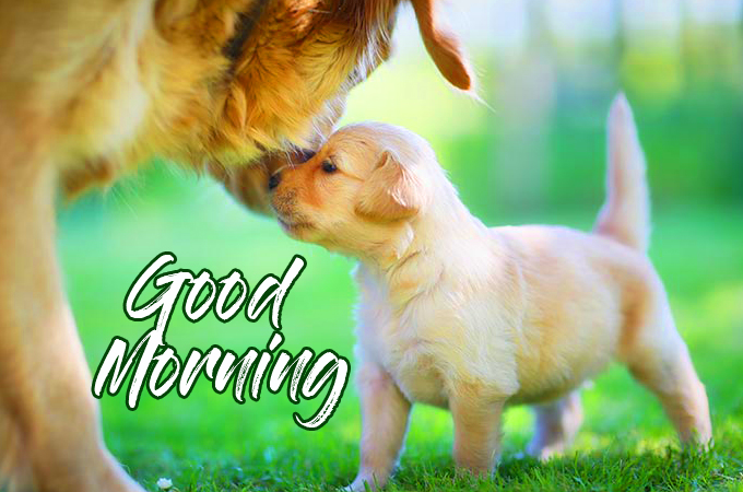 Good Morning Wish with Golden Puppy