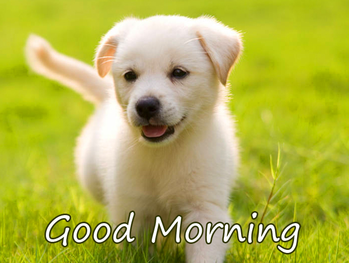 Good Morning Wish with Lovely Puppy HD Image