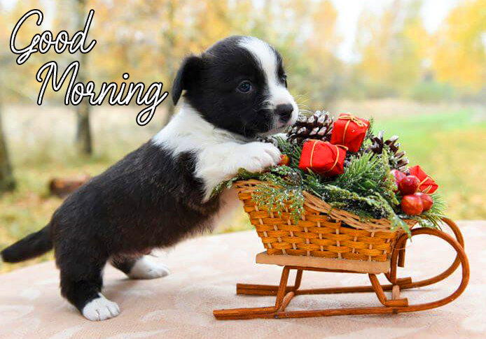 Good Morning Wish with Puppy and Basket