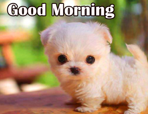 Good Morning with Sweet Puppy Pic