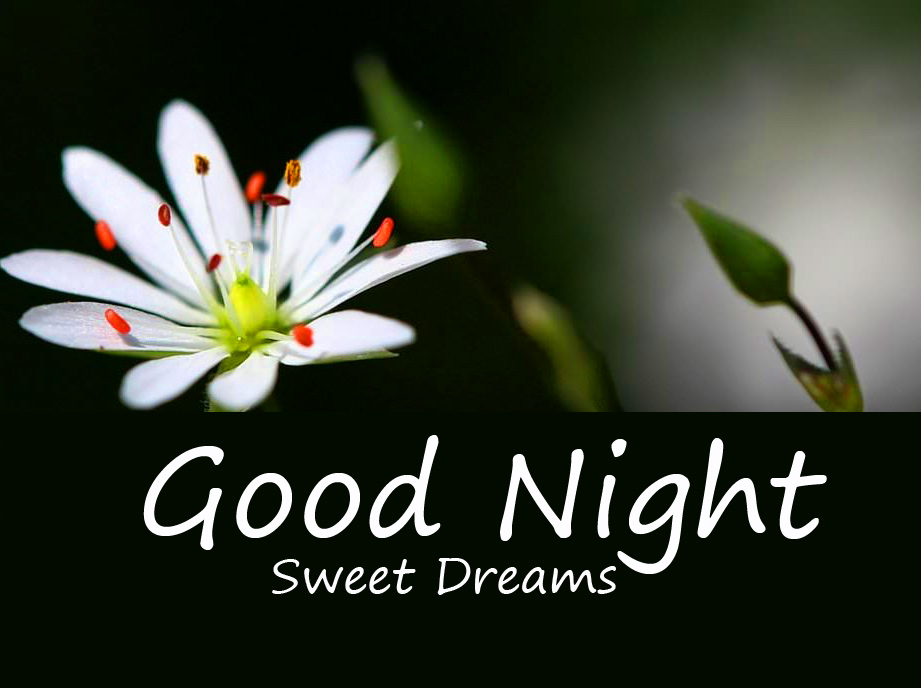 Good Night Sweet Dreams Flower Wish Picture