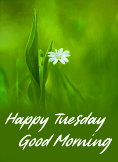 Green Good Morning Happy Tuesday Image