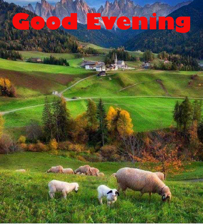 Green Scenery Good Evening Image HD
