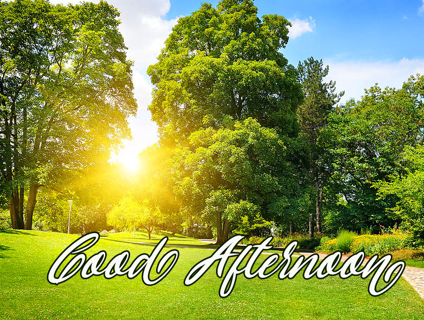 Green Sunny Day Good Afternoon Pic