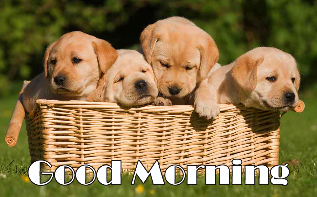 HD Puppies in Basket with Good Morning Wish