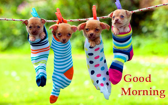 HD Puppies in Socks with Good Morning Wish