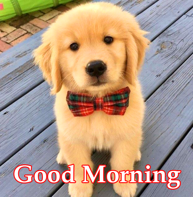 HD Puppy with Bow and Good Morning Wish