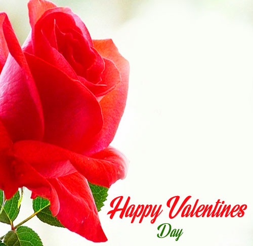 Happy Valentines Day Rose Picture