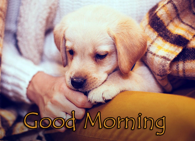Hero Puppy with Good Morning Wish