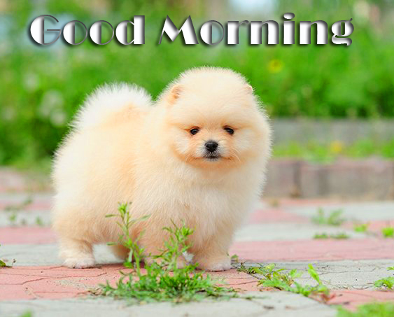Joyful and Fluffy Puppy Good Morning Image
