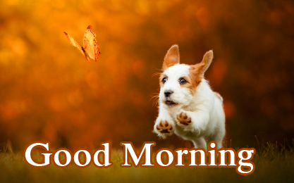Jumping Puppy Good Morning Image