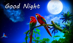 Love Parrots Couple Good Night Moonlight Image