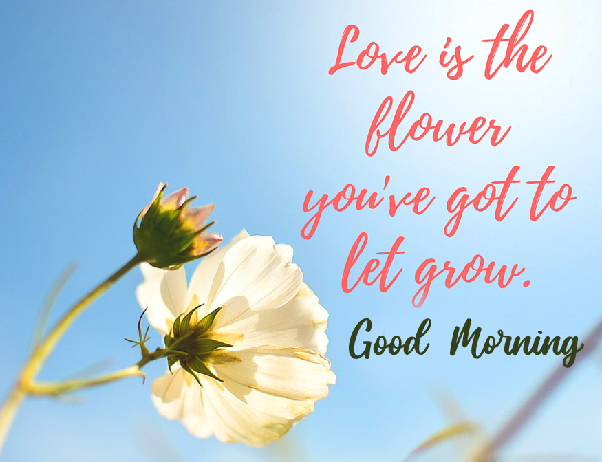 Love Quotes with Good Morning Wish