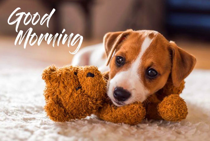 Lovely Puppy Good Morning Image